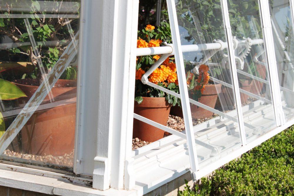 Mosquito-repellent plants: marigolds
