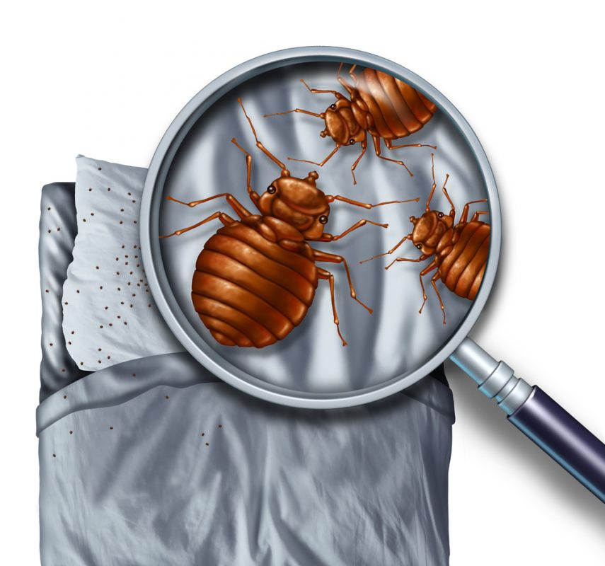 dust mites live in your mattress and their droppings can cause skin and nose irritation