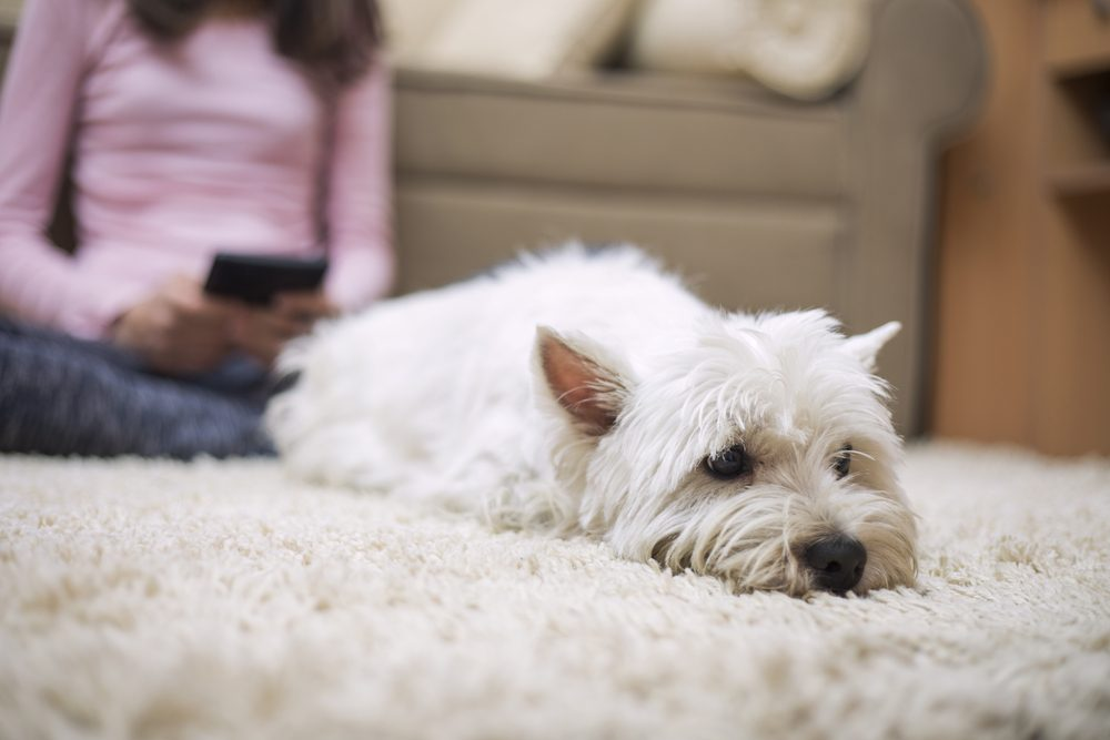 Dog-friendly home: all fours
