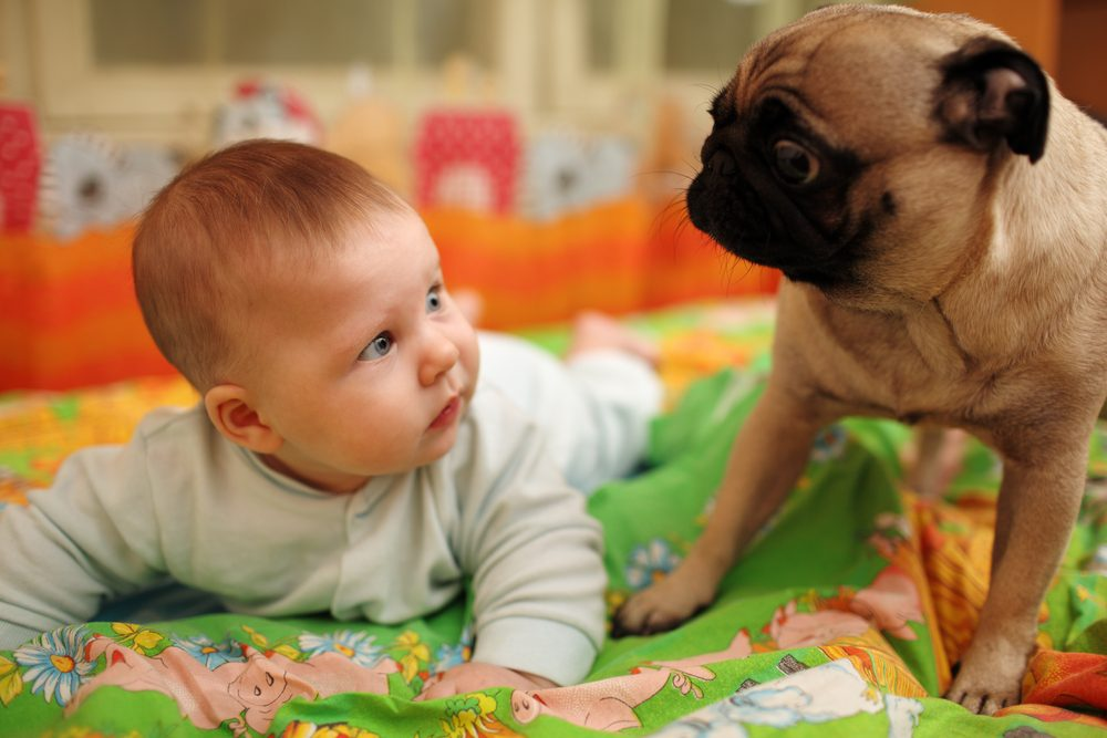 Dog-friendly home: baby-proof