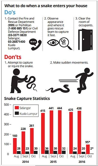 what to do if snake enters home - infographic from the thestar.com.my
