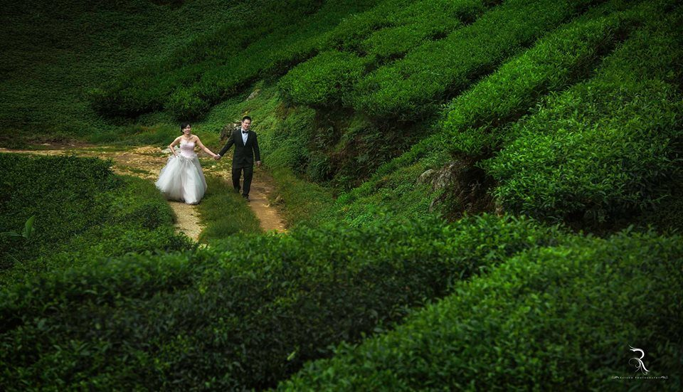 pre-wedding photos, cameron highlands