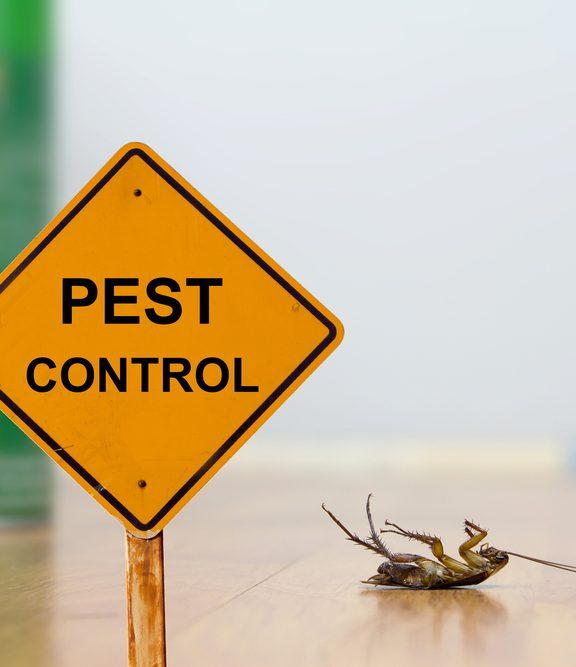 Berapa Harga Purata Harga Kawalan Serangga di Malaysia?