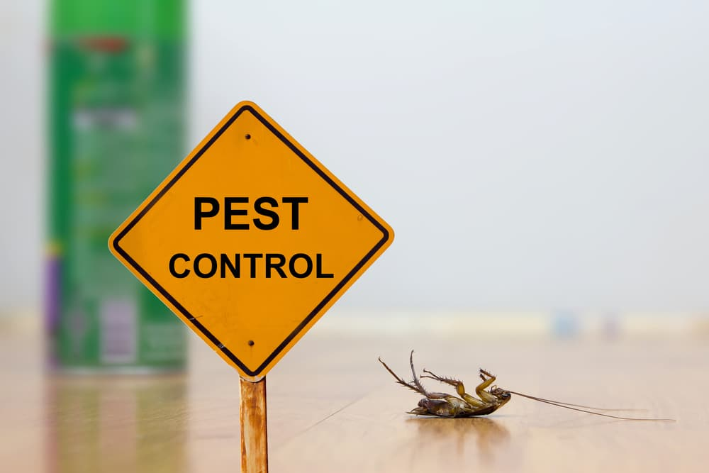 pest control services in malaysia