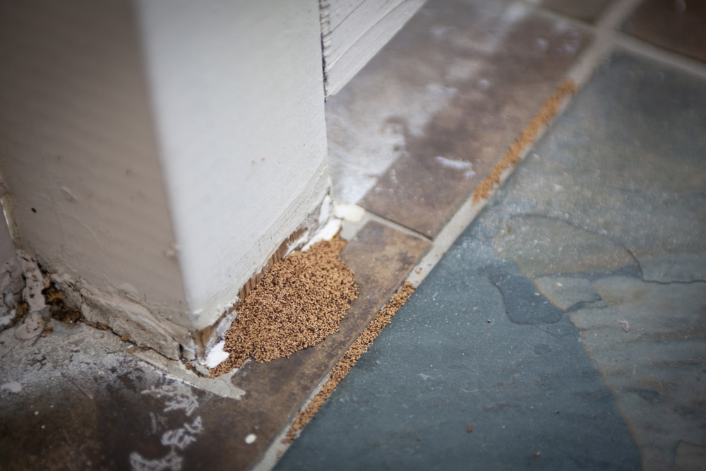 Termite droppings by a sidewalk